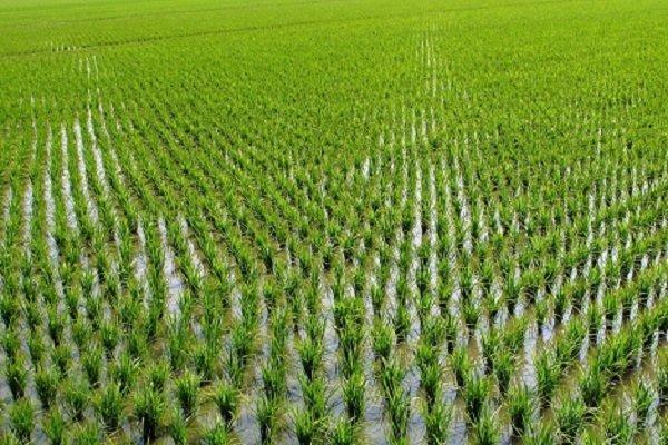 افتتاح بزرگترین پروژه تجهیز و نوسازی اراضی کشاورزی شمال کشور