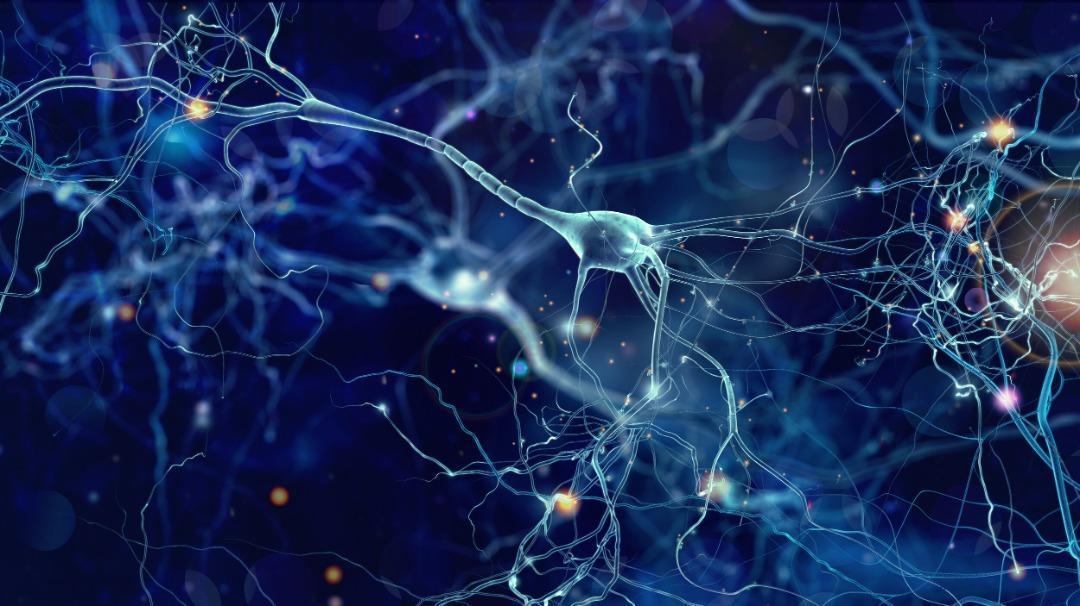 ساختار های نانویی درمانی نوین برای آسیب های نخاعی شناخته شدند