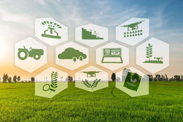 معرفی 19 شرکت دانش بنیان فعال برای توسعه کشاورزی دیجیتال